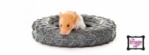 Pet portrait of Hamster by photographer Phill Andrew at The Image Mill