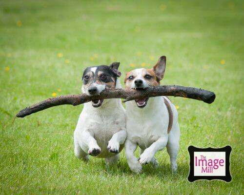 Dog portraits By pet photographer Phill Andrew at The Image Mill