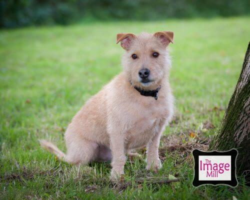 Terrier portrait by photographer Phill Andrew at The Image Mill